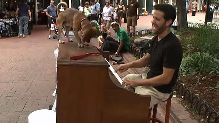 L'incroyable voyage de Dotan Negrin et de son piano