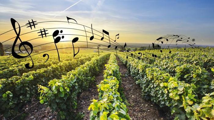 Et si la musique faisait pousser les plantes